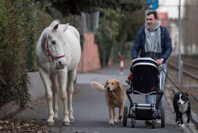 Cavallo con un uomo e un cane