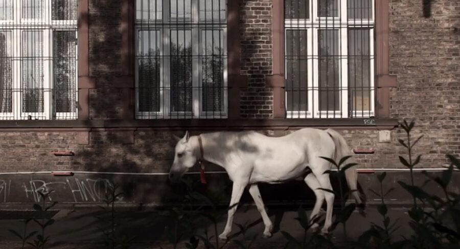 Cavallo che fa una passeggiata