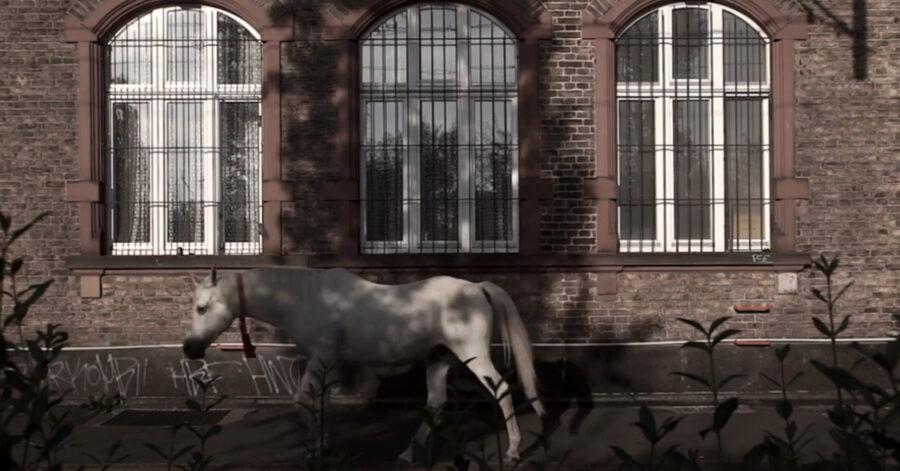 Cavallo che passeggia