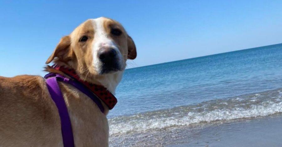 cagnolina al mare