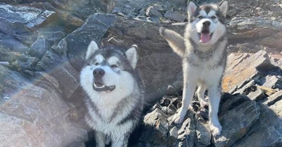 Due cani che osservano