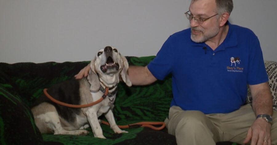 Cane anziano con il proprietario