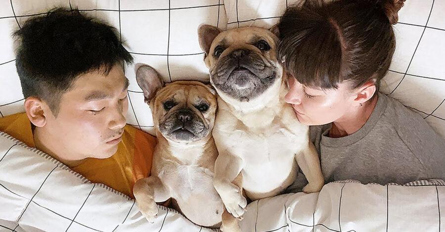 Cani che dormono in mezzo ai loro proprietari