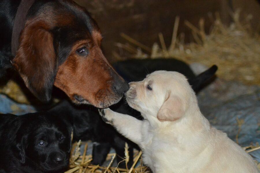 mamma cagna con cucciolo