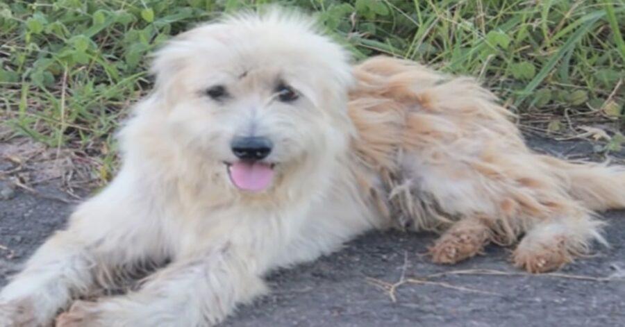 cane che ha aspettato la sua famiglia per quattro anni