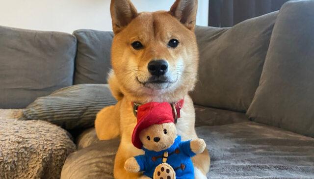Cane con un gioco