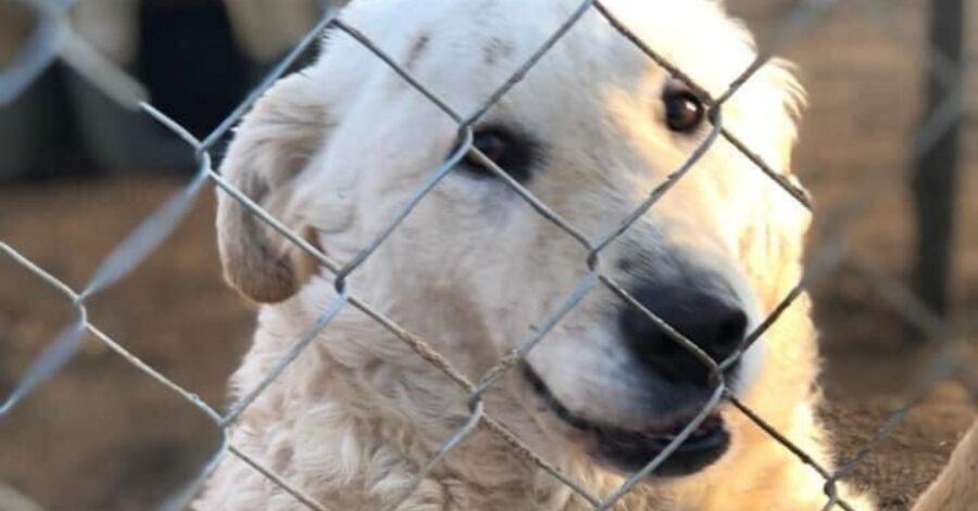 cane dietro una rete