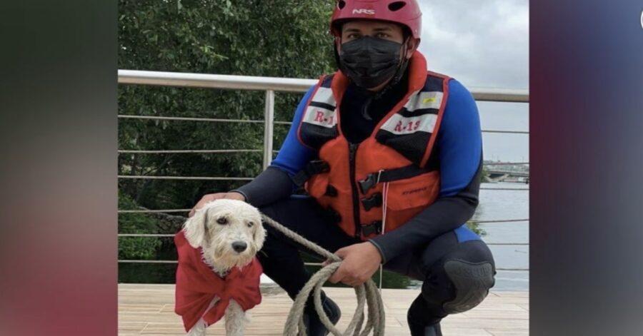 pompiere con cane salvato