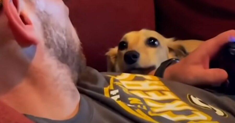 Cane che osserva il proprietario