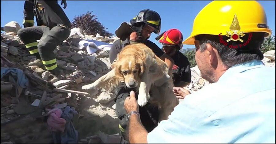 salvataggio cane dalle macerie di Amatrice