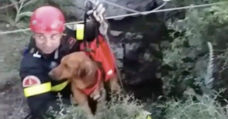 cane da caccia salvato dopo esser precipitato in una grotta
