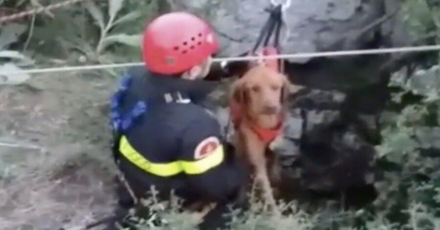 Pompiere salva cane da caccia