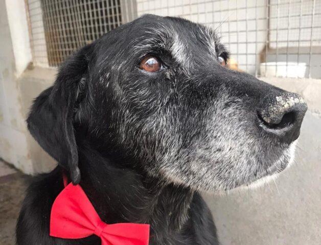 cane con fiocco