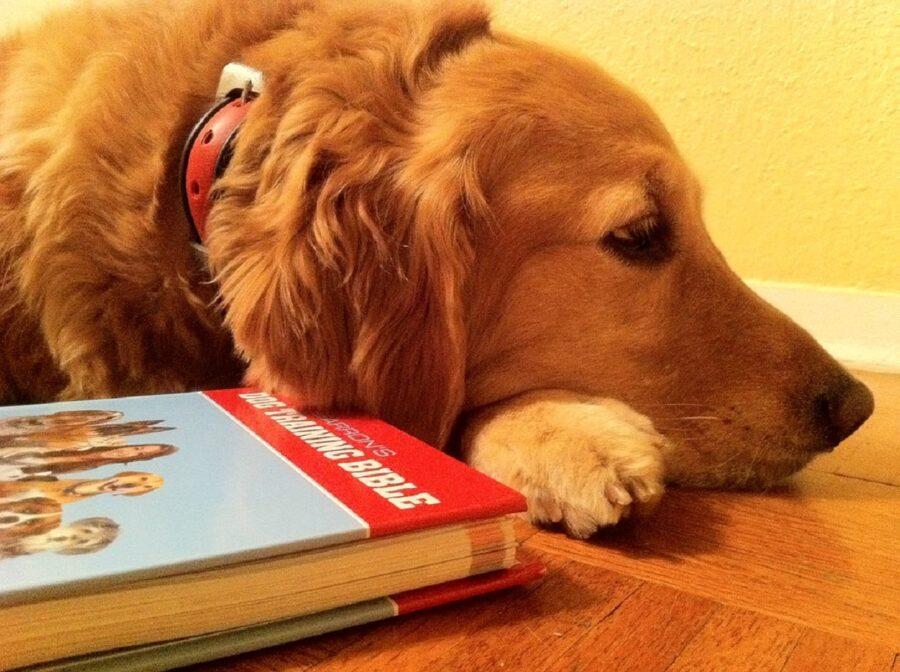 cane libro sonno