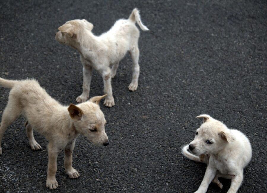 cagnolini strada asfalto triste