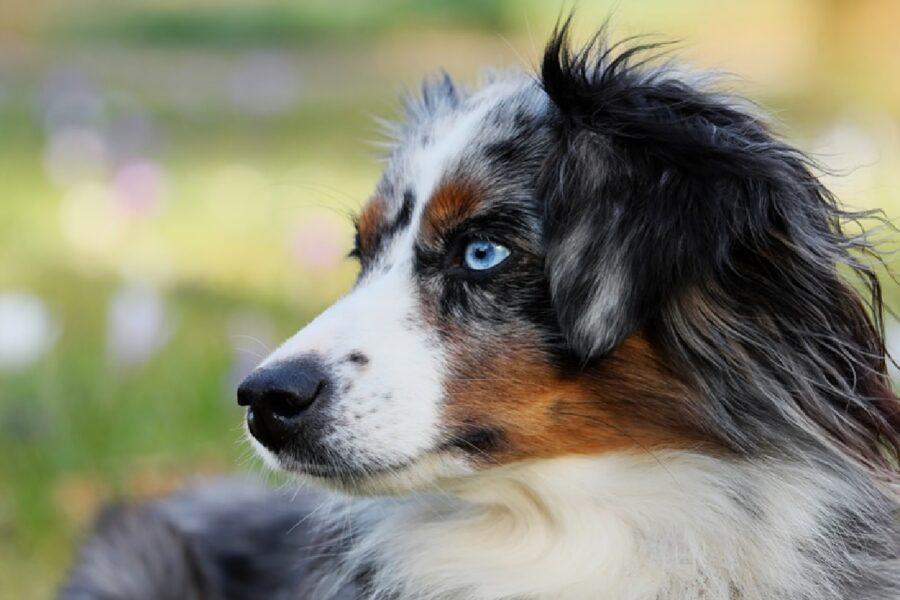 cane perso nella natura occhi