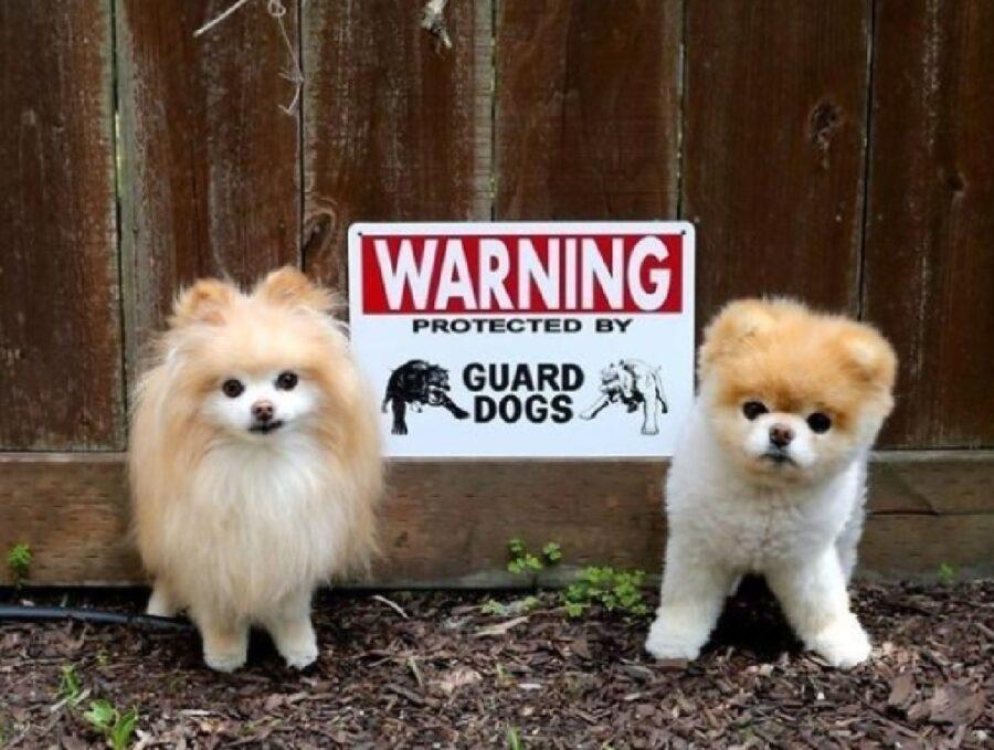 coppia cuccioli paura intensa