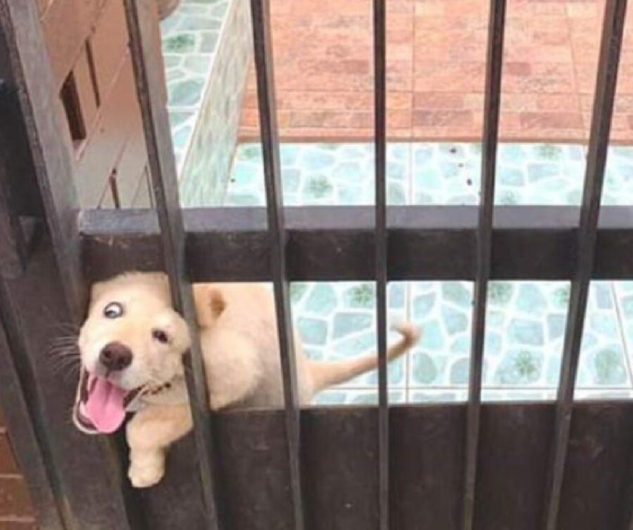 cucciolo incredibilmente felice di straniero