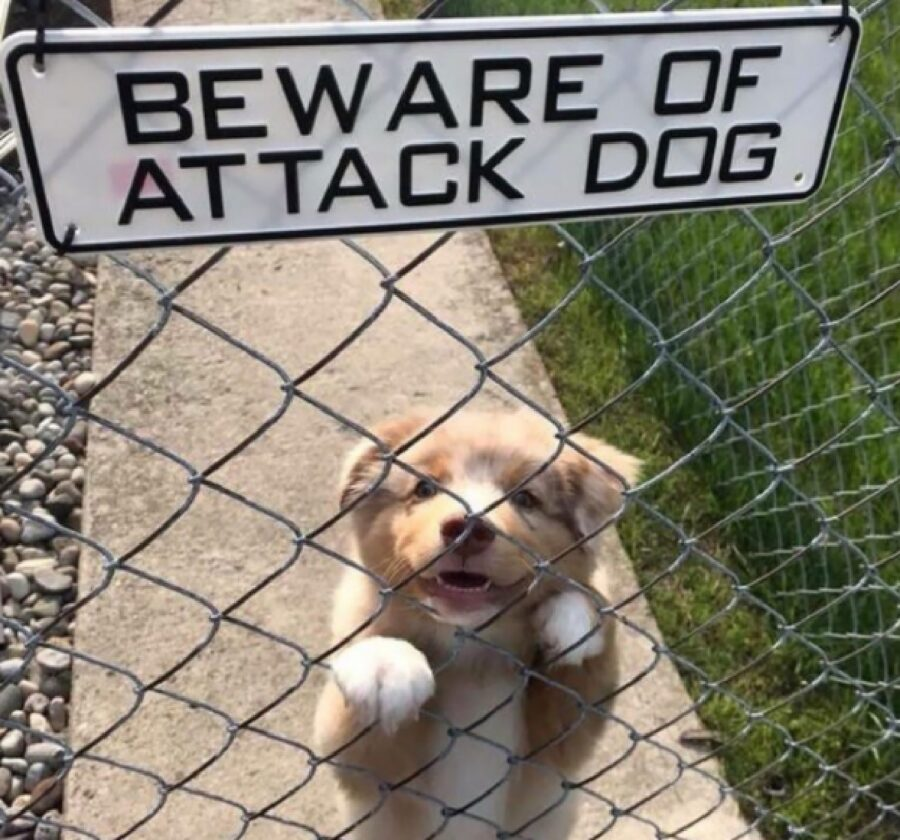 cagnolino rete sguardo assolutamente minaccioso