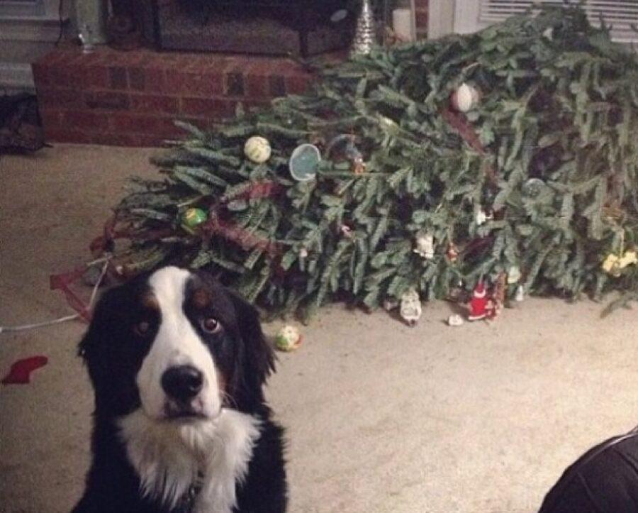cane bianco nero albero natale