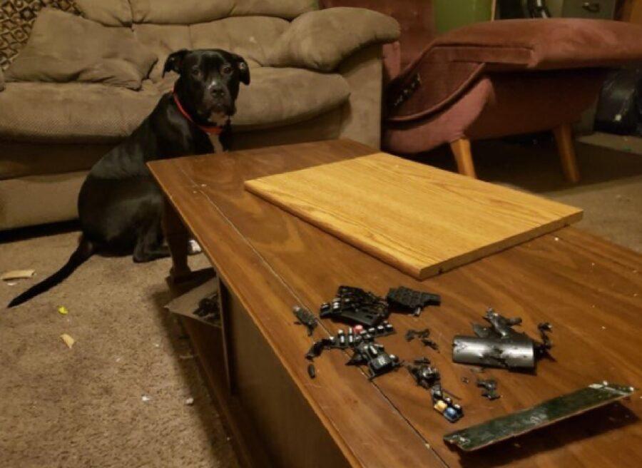 cane mangia telecomando