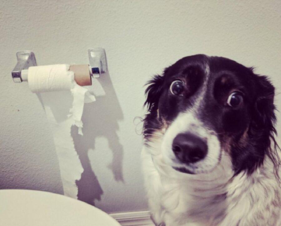 cane sguardo carta igienica