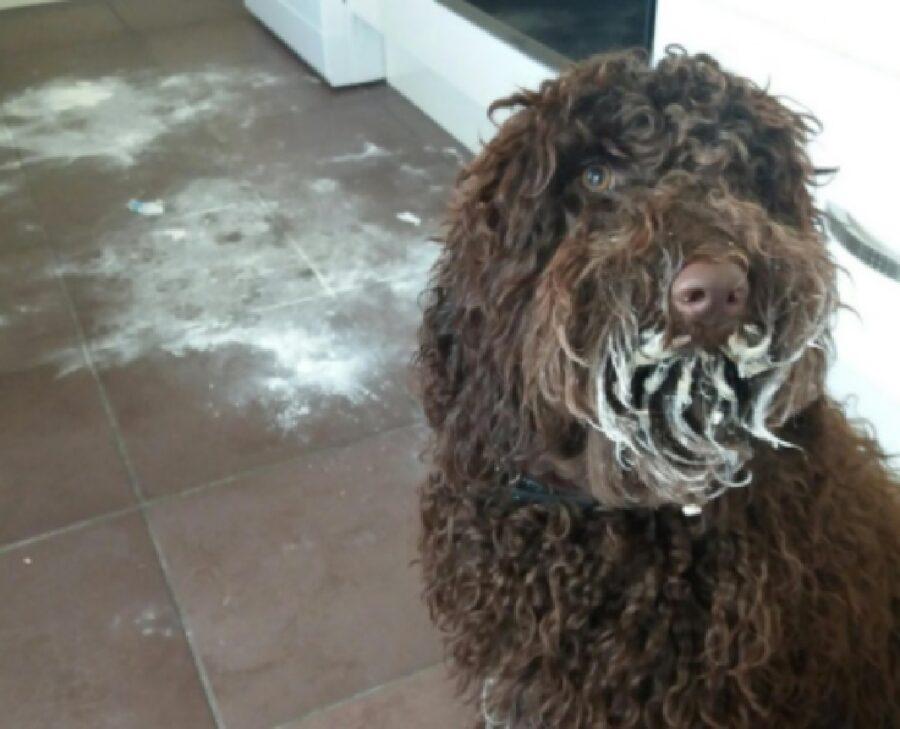 cane si diverte con farina