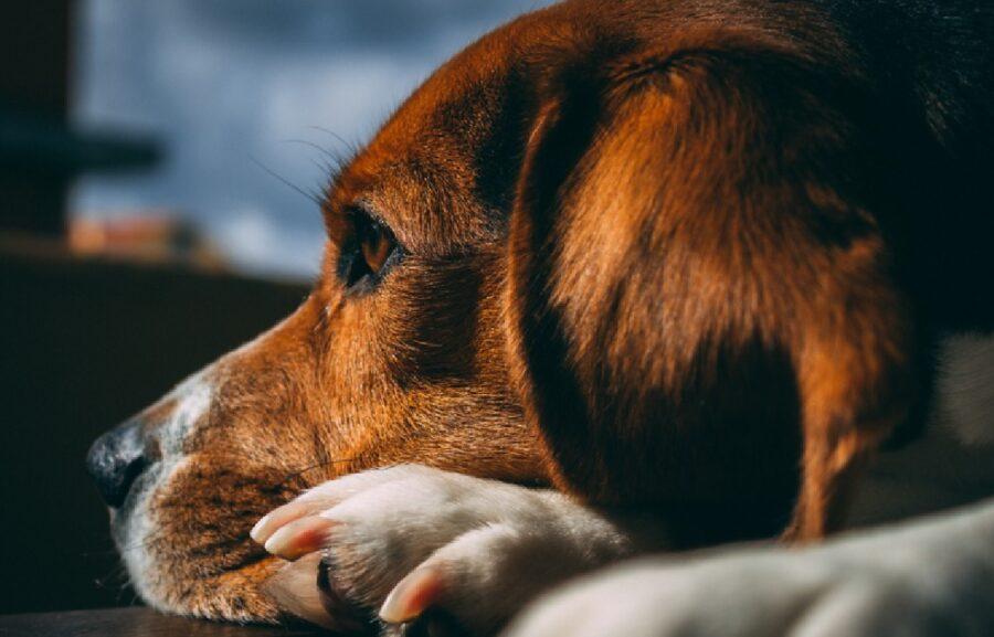 buddy cane proprietaria lascia partire appello