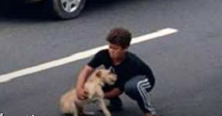 bimobo brasiliano salva cane in autostrada