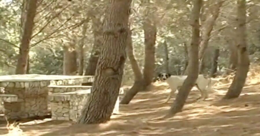 cane randagio nel bosco