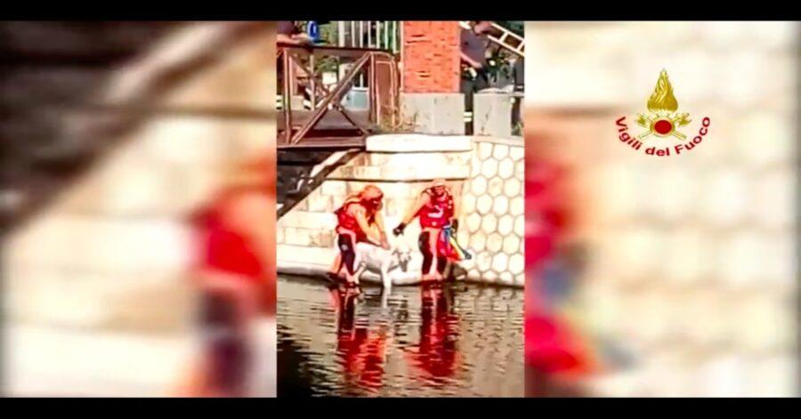 pompieri salvano un cane a Cagliari