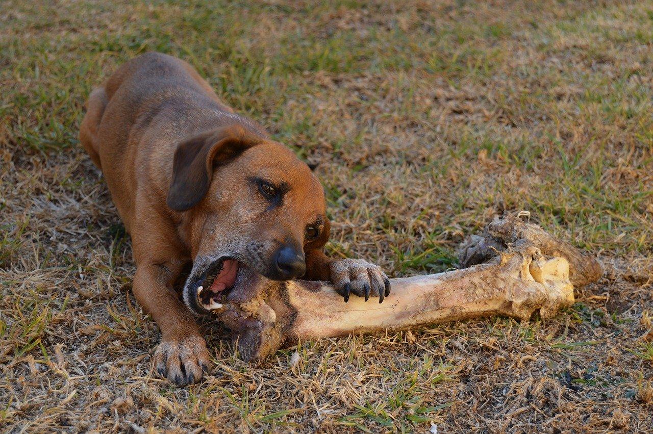 cane si divert con l'osso