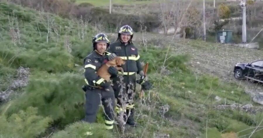 pompieri con cane salvato