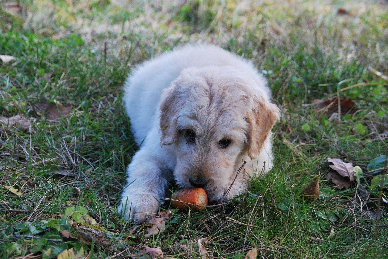 cane trova cibo per terra