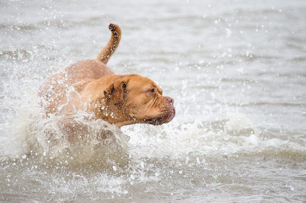 cane fa il bagno al mare