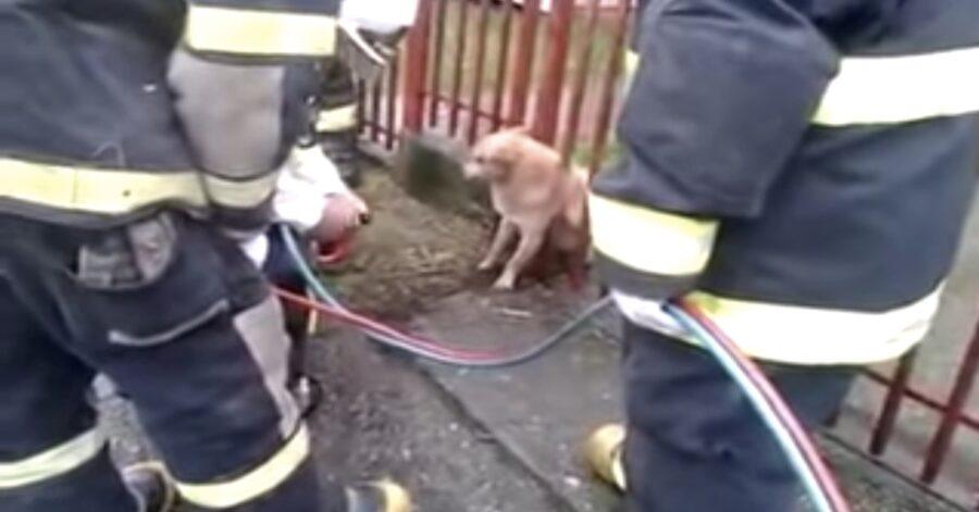 cane liberato dai pompieri incastrato fra le sbarre