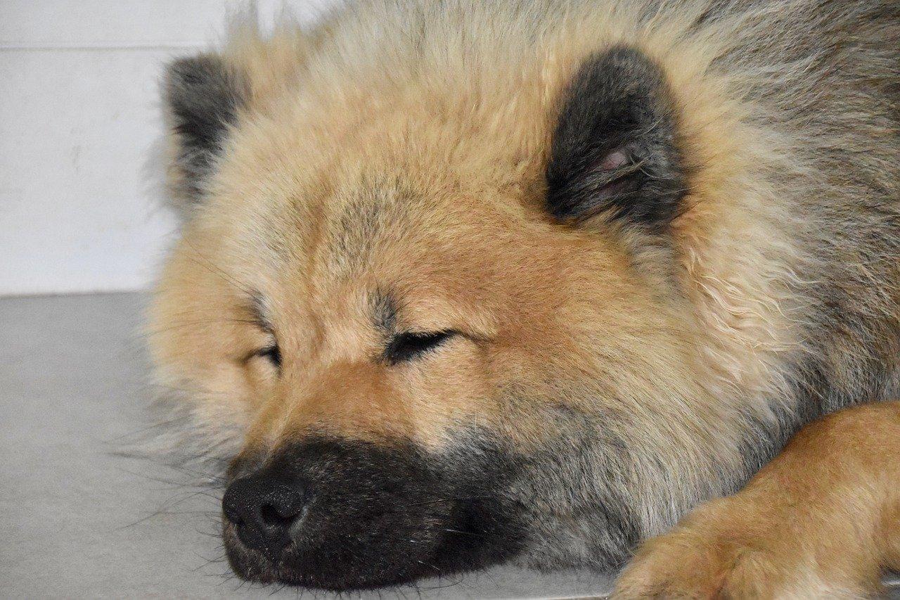 cucciolo sonnecchia