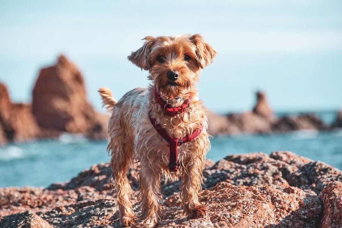 cane sugli scogli