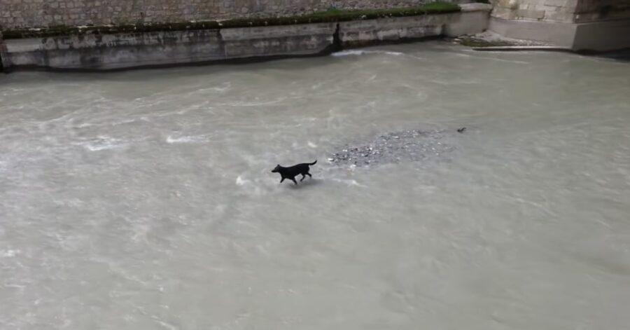 cane in acqua bloccato in mezzo ai flutti