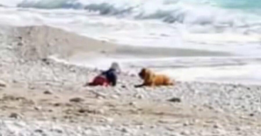 cane e bimbo sulla riva