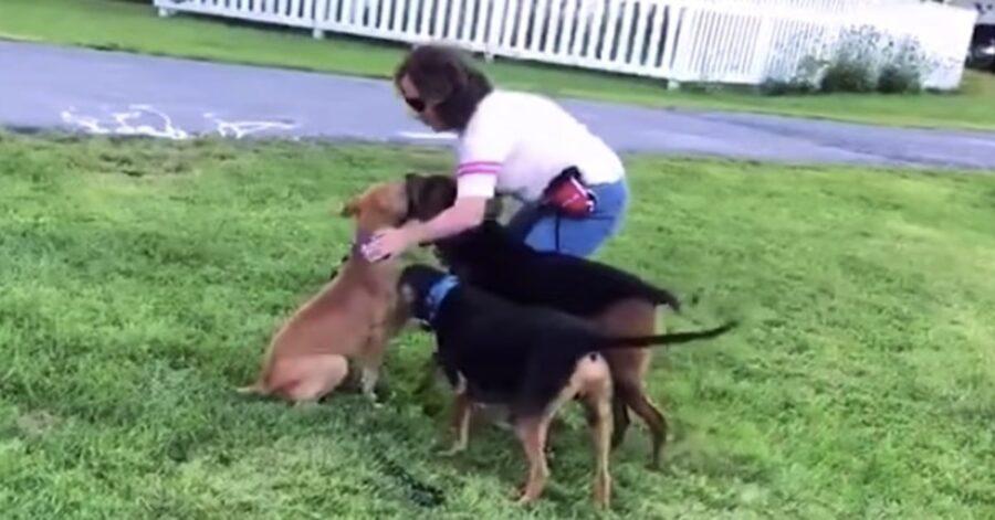 cane gioca con la padrona e i suoi fratelli pelosi