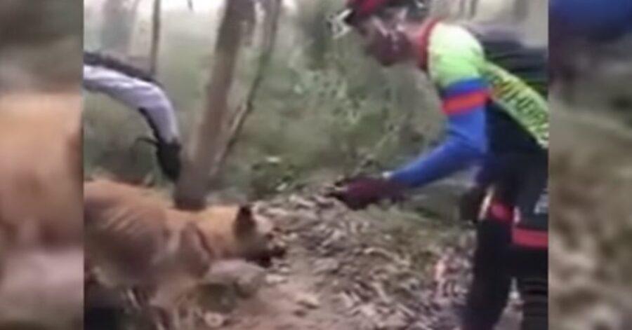 cane salvato in una macchia