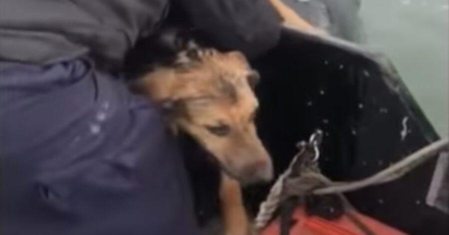 cagnolino salvato in mare