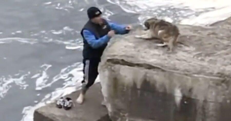 uomo cerca di salvare un cane in pericolo