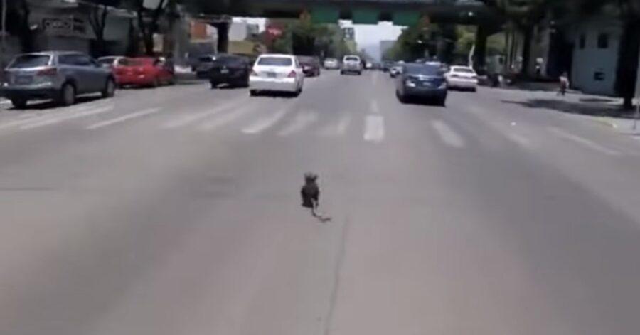 cane corre in una strada di Città del Messico