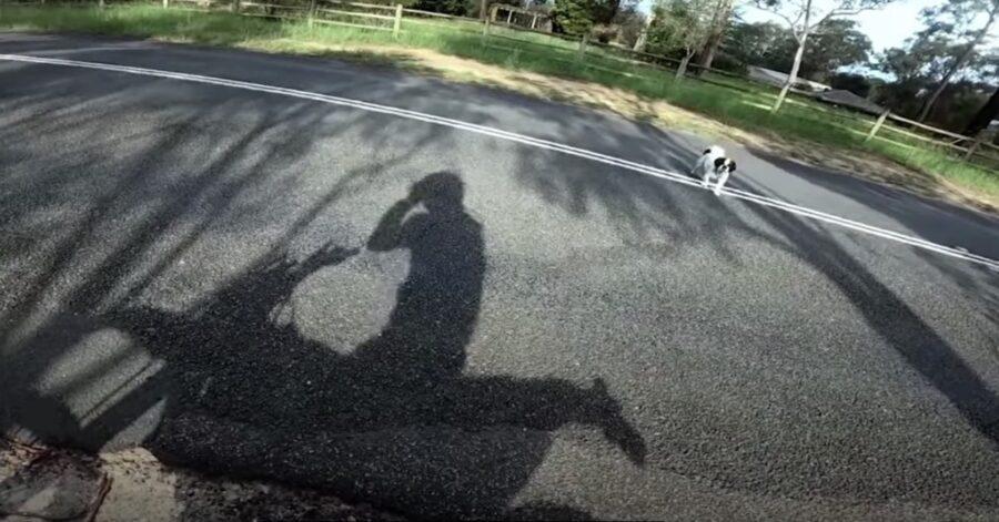 centauro telefono a padrona di cane smarrito