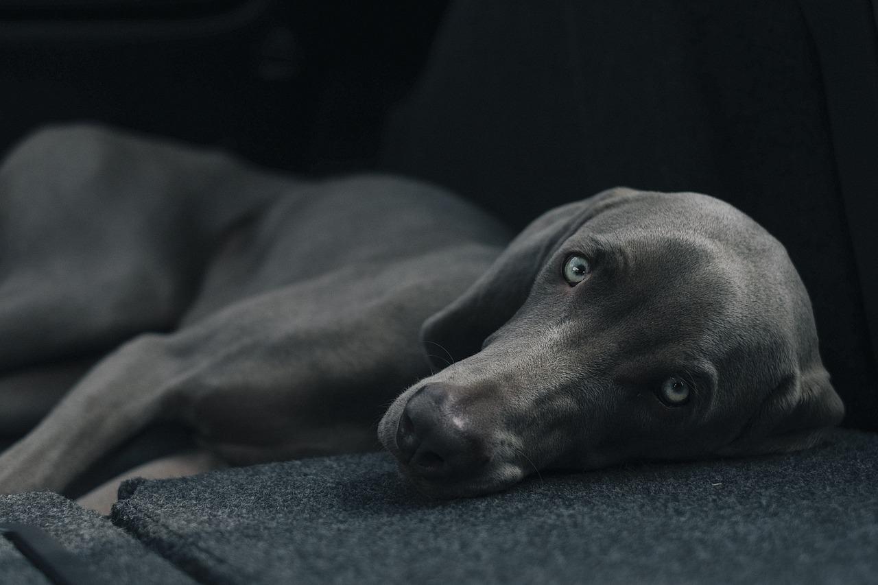 cagnolino rilassato