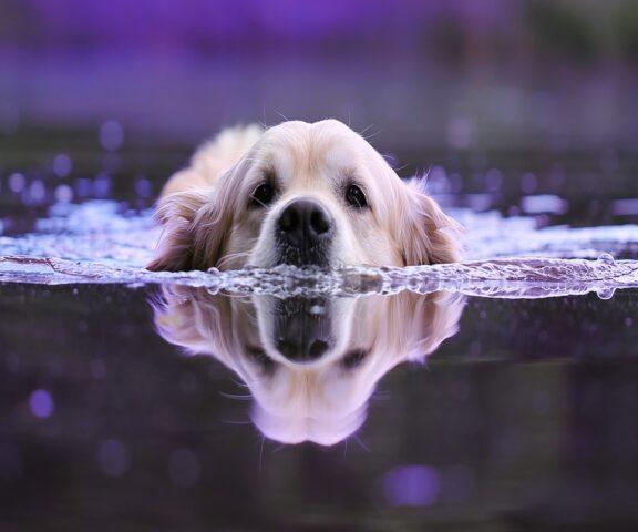 cane nuota