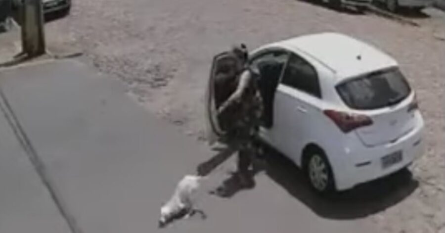 donna abbandona cagnolino