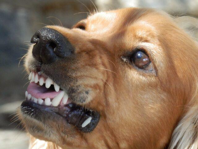 cane arrabbiato